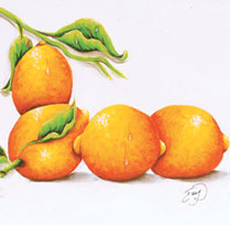 Les citrons !