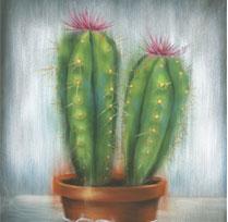 L'été sera cactus