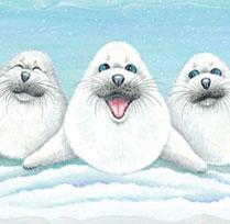 Trio de phoques rigolos