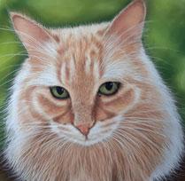 Belle: le chat royal de la principauté de Leuca